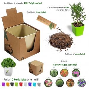 Tohumlu Bitki Yetiştirme Seti